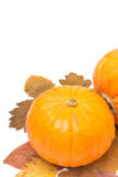 Two pumpkins on autumn leaves isolated on white. And space for text, close-up Royalty Free Stock Photography