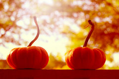 Two pumpkins with bright background Stock Photos