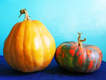 Two pumpkins. Two colorful pumpkins with stems on a blue background Stock Images