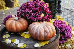 Two pumpkins among flowers and autumn leaves. Two big pumpkins among purple flowers and autumn leaves on a wooden barrel Royalty Free Stock Images