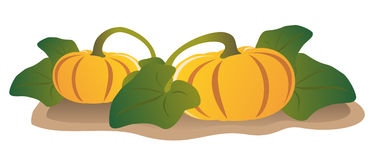 Two pumpkins. On a garden-bed Stock Image