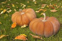 Two pumpkins. On green gras with fallen leafs Stock Photos