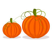 Two pumpkins illustration Stock Images