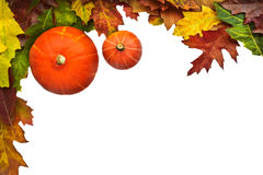 Two pumpkins with leaves isolated on white. View from above of two pumpkins with leaves isolated on a white background Royalty Free Stock Photo