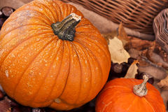 Two pumpkins with leaves and wodden basket Stock Images