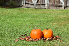 Two Pumpkins Stock Photos