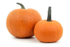Two pumpkins orange squash studio shot on white background for halloween or thanksgiving Royalty Free Stock Photos