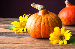 Two pumpkins and sunflower on wooden table. Copyspace Stock Images