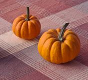 Two pumpkins on a table Royalty Free Stock Photo