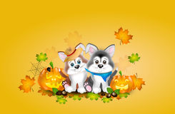 Two puppies with autumn decoration Stock Photo