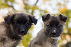 Two puppies. Two beautiful puppies are sitting together Royalty Free Stock Images