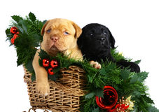 Two puppies in Christmas sledge. Stock Photography