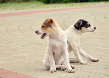 Two puppies looking in different directions Stock Photo