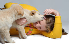 Two puppies play with girl Stock Image