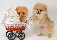 Two puppies with a sidecar Stock Image