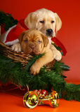 Two puppies in sledge with a Christmas garland. Royalty Free Stock Images