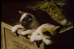 Two puppies in wooden box stock video