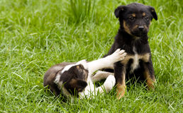 Two puppy. Two pupies on a tree background Royalty Free Stock Images