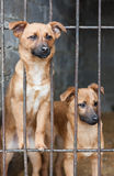 Two puppy Stock Photography