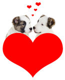 Two puppy love Royalty Free Stock Images
