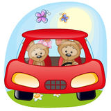 Two Puppys in a car Stock Image