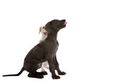 Two pups Royalty Free Stock Photos