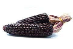 Two Purple corn Stock Photo