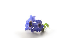 Two Purple Flowers Royalty Free Stock Images
