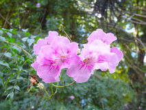 Two purple flowers Royalty Free Stock Photography