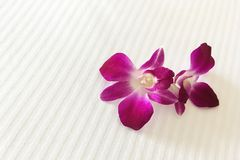 Two Purple red orchids on hotel bed are meaning of welcome. Two Purple red orchids on hotel bed are meaning of welcome and love for honeymoon lover stock photos