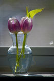 Two purple tulips in a small vase on a windowsill. Royalty Free Stock Photo