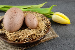 Two quail easter eggs and yellow tulip on dark background. Stock Photos