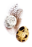 Two  Quail Eggs with feathers isolated on white background, macr Royalty Free Stock Photos