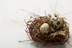 Two Quail eggs in nest Royalty Free Stock Image