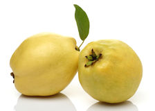 Two Quince Royalty Free Stock Images