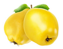 Two quince fruits isolated. On white with clipping path Royalty Free Stock Photography