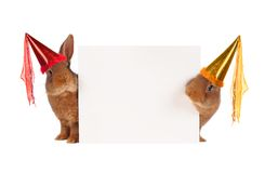 Two rabbit Royalty Free Stock Photography