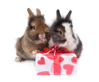 Two rabbit with present Royalty Free Stock Photos