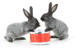Two rabbit sitting Royalty Free Stock Photo