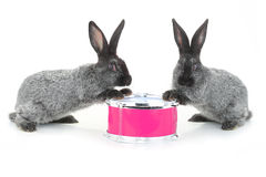 Two rabbit sitting Royalty Free Stock Images