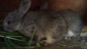 Two rabbit stock footage