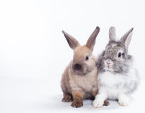 Two rabbits. Stock Photo