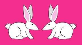 Two Rabbits. Two white rabbits Stock Image