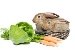 Two rabbits in a basket Stock Photo