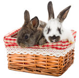 Two rabbits in basket Royalty Free Stock Photography