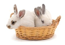 Two rabbits in a basket. Two rabbits in a basket on a white background Stock Image
