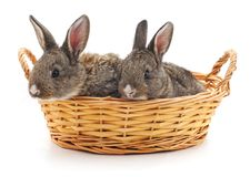 Two rabbits in a basket. Two rabbits in a basket on a white background Stock Photography
