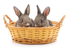 Two rabbits in a basket. Two rabbits in a basket on a white background Stock Photo