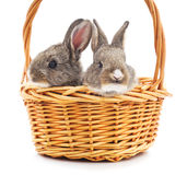 Two rabbits in a basket. Stock Image