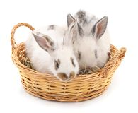 Two rabbits in a basket. Two rabbits in a basket on a white background Royalty Free Stock Photo